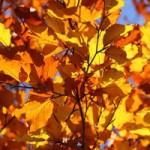 Blog-img-Transitioning-to-Autumn-300x200.jpg